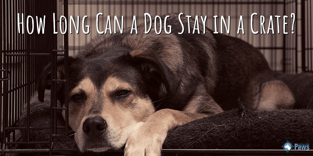 How Long Can a Dog Stay in a Crate?