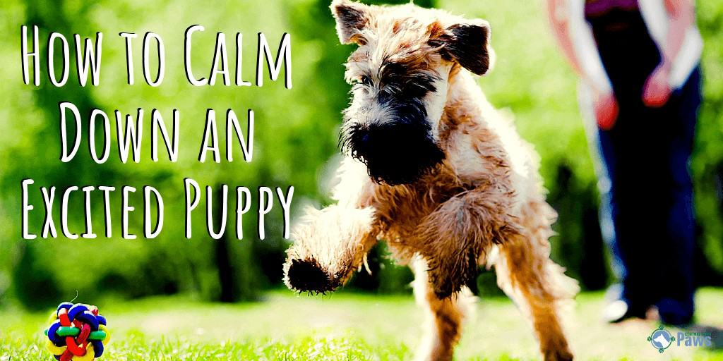 How to Calm Down an Excited Hyper Puppy
