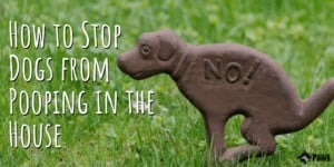 How to Stop Your Dogs from Pooping in the House