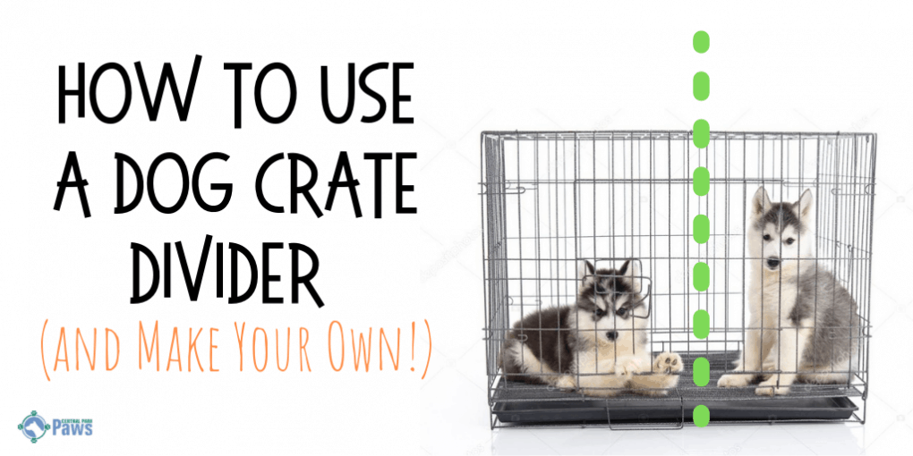 How to Use a Dog Crate Divider (and Make Your Own!)