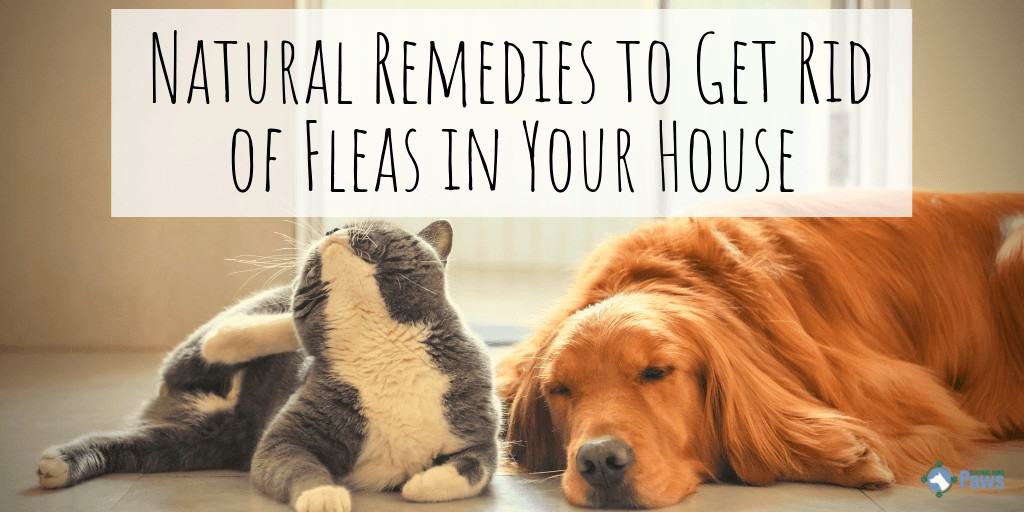 Natural Home Remedies to Get Rid of Fleas in Your House