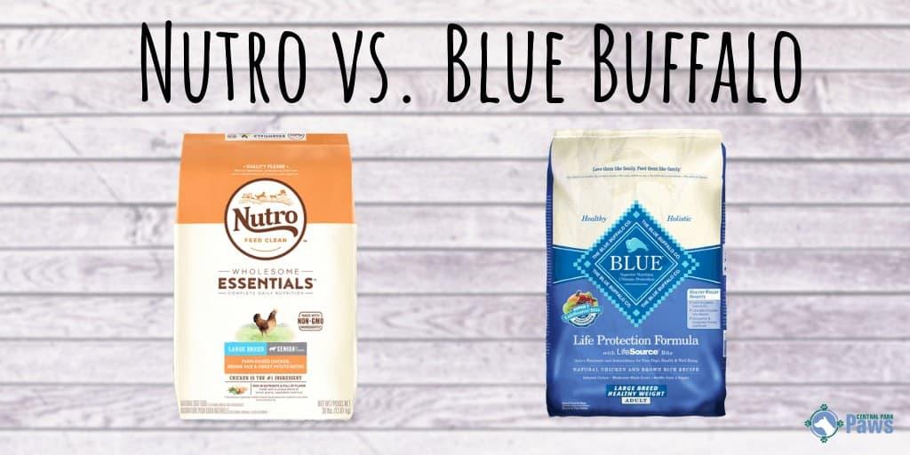 Nutro vs Blue Buffalo Dog Food Review