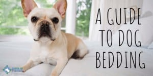 What Can I Use for Bedding in My Dog_ How to Keep Your Dog Comfortable