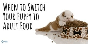 When to Switch Your Dog From Puppy to Adult Food