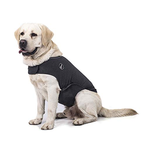 Anxiety vest to calm dogs prevent stop peeing on bed