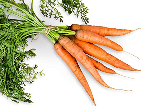 add carrots to your dog's diet