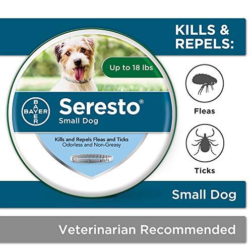 Bayer Seresto small dog flea collar good for puppies ticks vet recommended