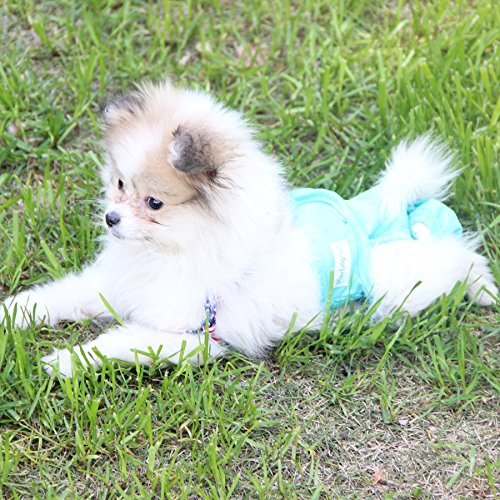 Dog diapers to prevent mess when dog pees marks their bed from incontinence