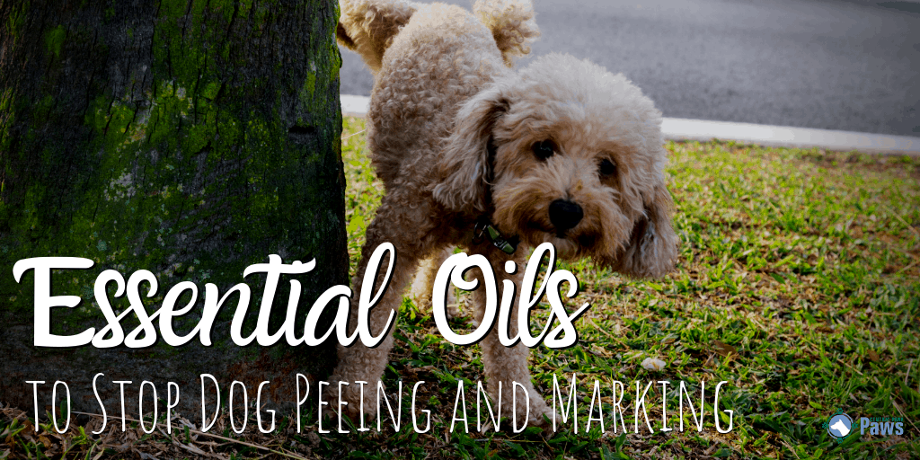 Essential Oils Sprays To Stop Your Dog From Peeing And Marking