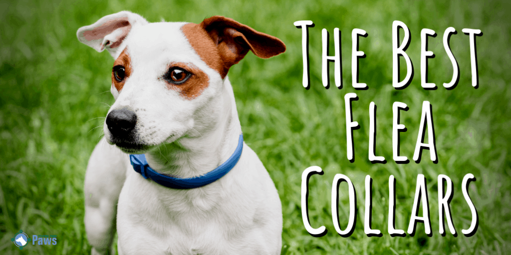 The Best Flea Collars for Dogs