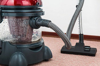 vacuum cleaner constant cleaning help prevent flea egg infestation in your house