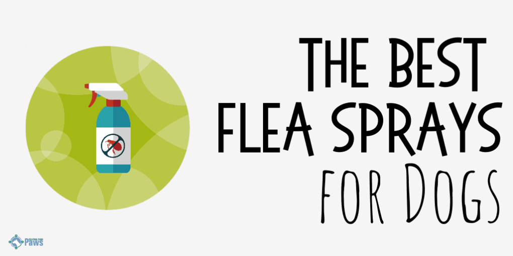 Best Flea Sprays for Dogs