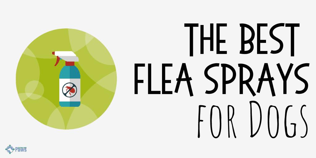 Best Flea Sprays for Dogs
