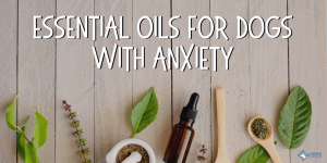 Calming Essential Oils for Dogs with Anxiety