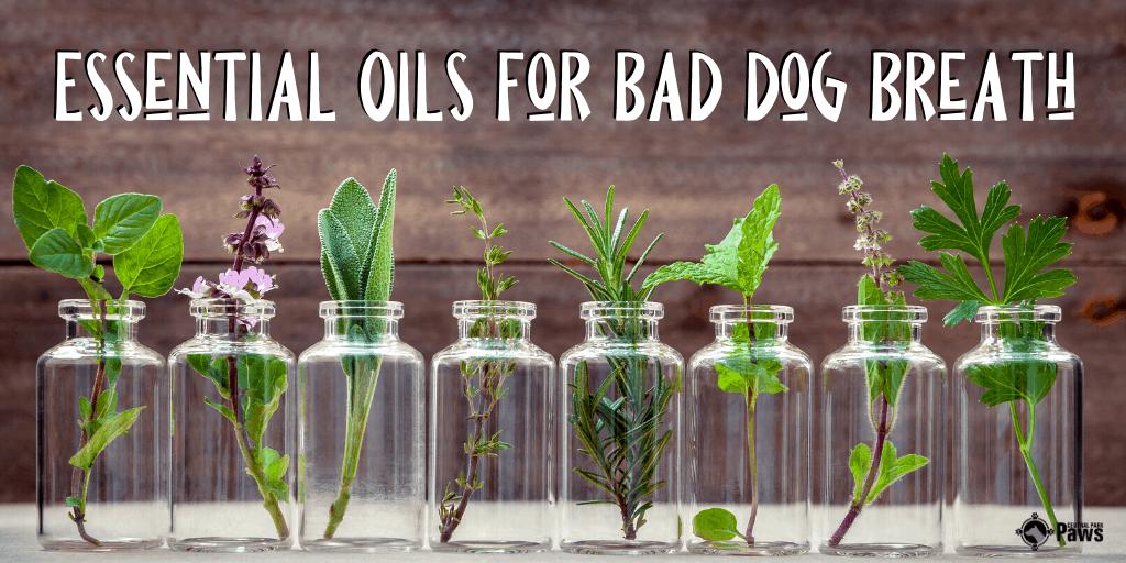 Essential Oils for Bad Dog Breath