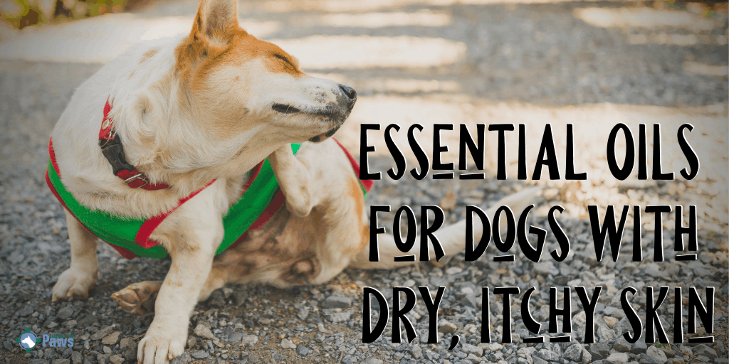 Essential Oils for Dogs with Dry, Itchy Skin