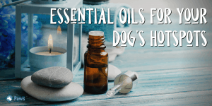 Essential Oils for Your Dog's Hotspots
