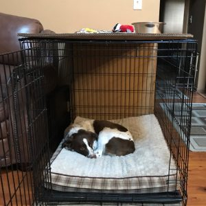 Wire dog crate in living room eye sore improve aesthetic looks