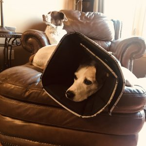 How to treat dog hot spots inflammation stop licking irritation with comfy cone