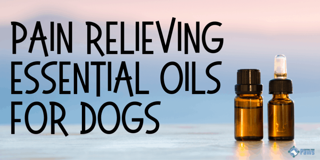 Pain Relieving Essential Oils for Dogs