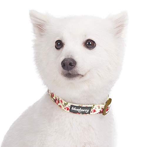 Puppy training collar scared of tugging unfamiliar with leash training