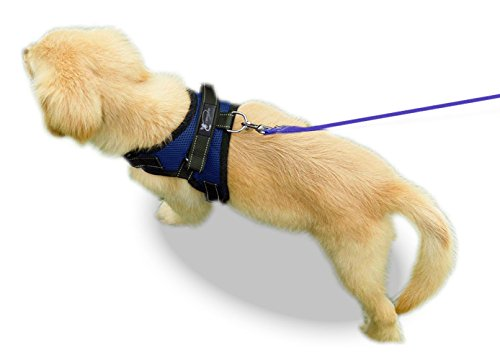 Can you use dog harness to stop puppy from chewing leash pulled tight comfortable