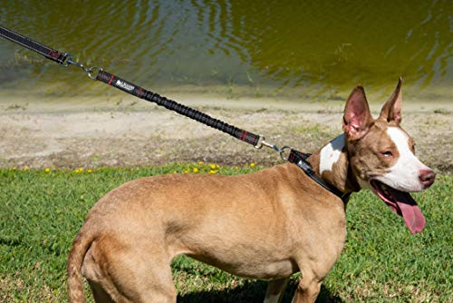 Leash Boss bungee extension makes off leash walking easier