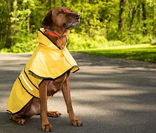 Dog won't walk bad weather doggy rain coat jacket inclement weather pet protection