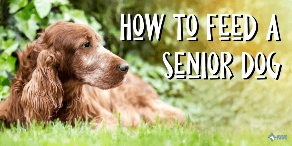 How to Feed Your Senior Dog_ Softening the Food, Adding Supplements, and More