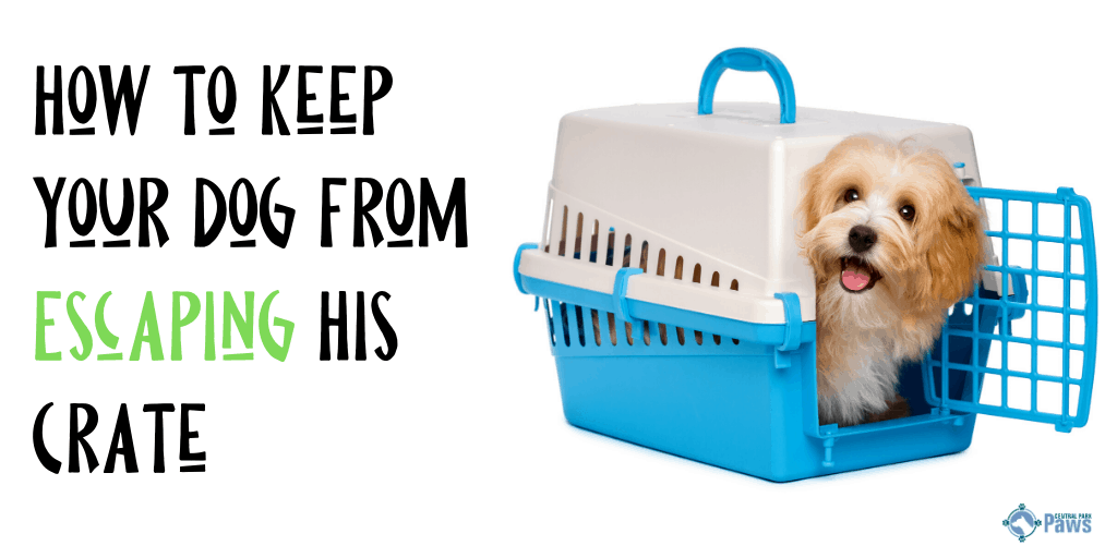 How to Keep Dog From Escaping Crate