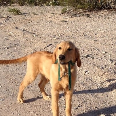 How to start off leash dog walking training need to know basics