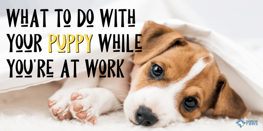 What to Do With Your Puppy While You're at Work