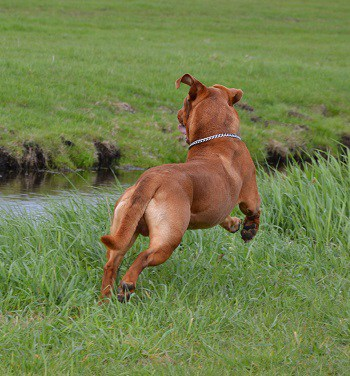 What to do when dog runs off without leash while recall training