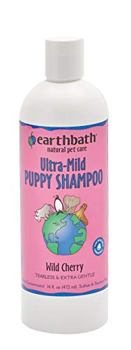 Do puppies need baths shampoo best choices product recommendations
