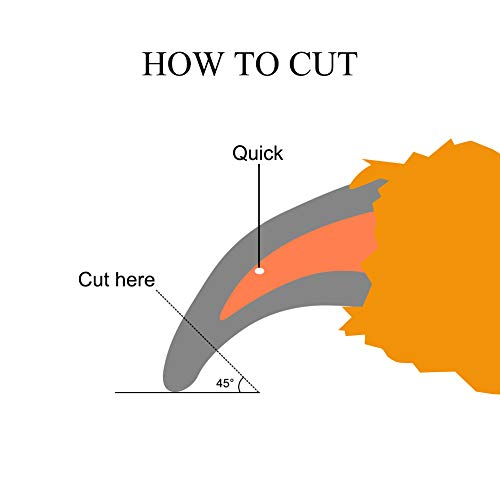 How to cut claws without nicking quick bleeding after trimming