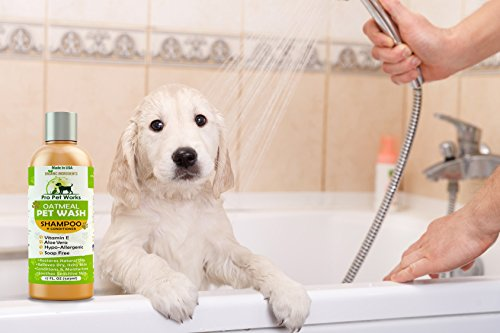 How to wash dog collar with pet wash shampoo instructions