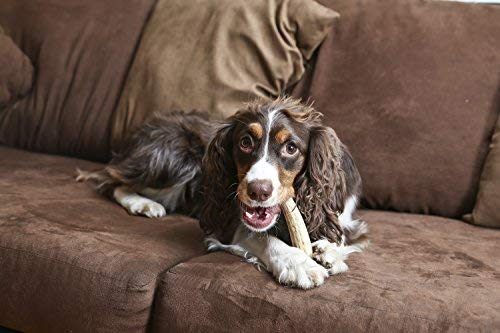 Antler chew toy for dogs training healthy behaviors