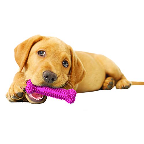 Puppy chewing teething toy Nylabone safety