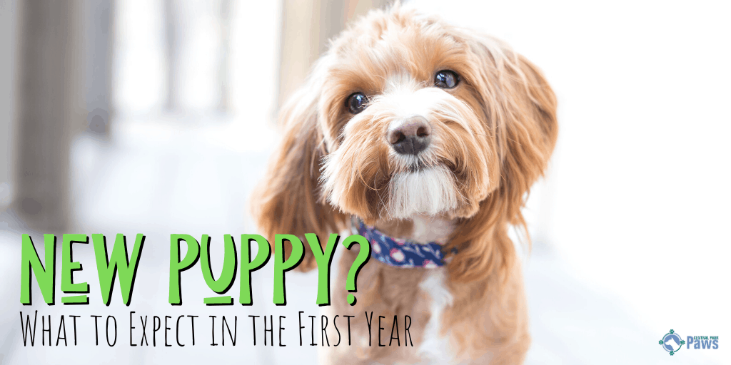 Bringing Home a New Puppy_ What to Expect in the First Year
