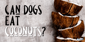Can Dogs Eat Coconuts?