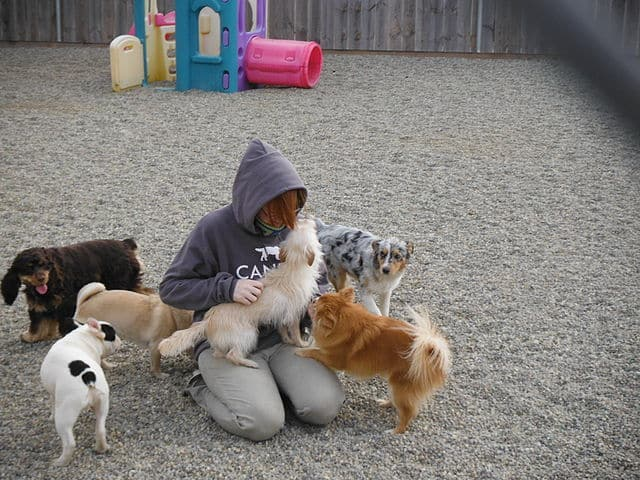 Doggy daycare for puppies while working pros cons how to choose budget