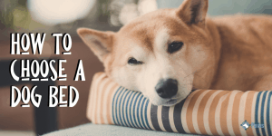 How to Choose a Dog Bed Based on Size, Breed, and Age