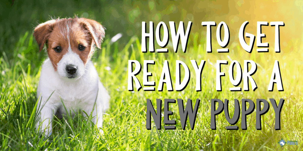 How to Get Ready for a New Puppy