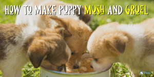 How to Make Puppy Mush and Puppy Gruel for Weaning Puppies