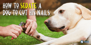 How to Sedate a Dog to Cut His Nails