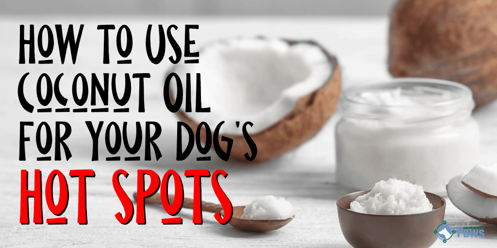 How to Use Coconut Oil for Dog Hot Spots