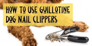 How to Use Guillotine Dog Nail Clippers