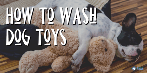 How to Wash Plush, Rubber, and Soft Dog Toys (1)