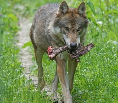 How to choose dog food Merrick Taste of the Wild best tasting alternative