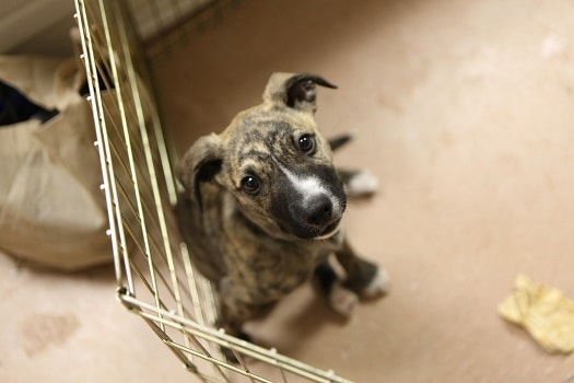 How to leave puppy at home while at work crate train not just dog pen